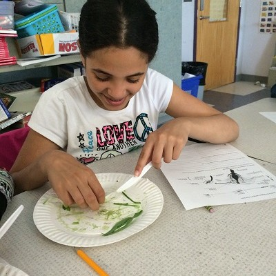Plant Dissection