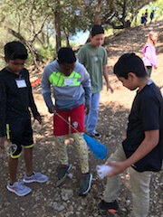 A small group of students is outside with a bug net and plastic cups hunting for bugs.