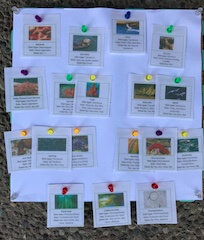 Small cards are arranged on a cork board to show a food web.