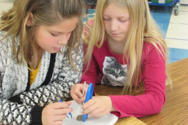 Two students dissect an owl pellet.
