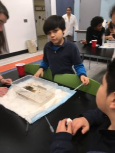 Students work with containers of water as a model for an oil spill.