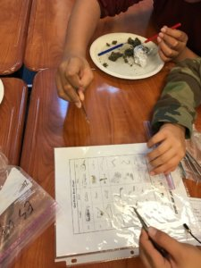 Students dissect owl pellets and consult a bone chart