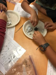 Students dissect owl pellets.