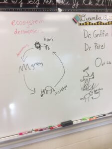 A whiteboard drawing of a food web.
