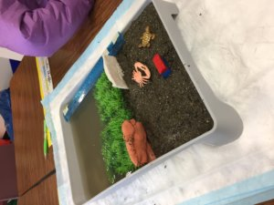 Student use sea grass in their model beach to stop erosion