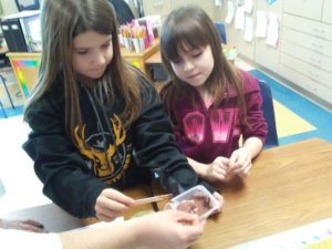 Students investigate a soil sample.