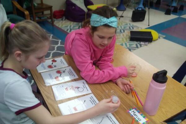 Students follow step-by-step instructions from cards to extract DNA.