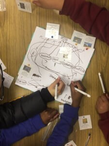Students draw lines to create a food web of cards.