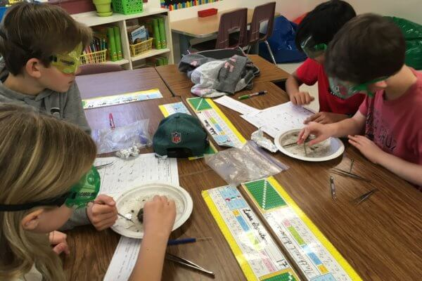 Students wear googles and work with tweezers and picks to dissect owl pellets.