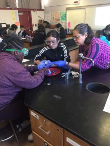 Students wearing goggles and gloves dissect sheep eyes.