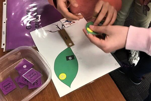 A student folds an extra leaf to add to their photosynthesis card.