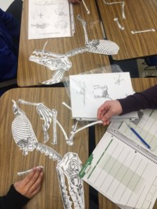 Students put together a fossil puzzle.