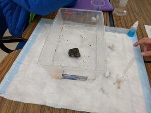 Students work to clean up a model oil spill.