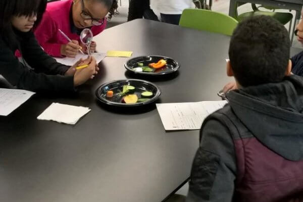 Students use magnifying glasses to look at vegetables.
