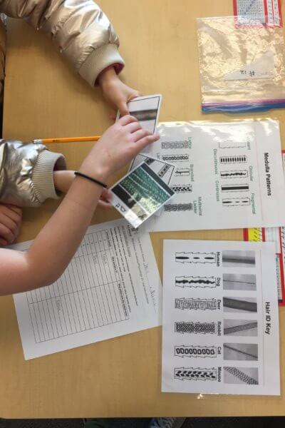 Students identify hair samples on cards.