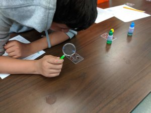 Student uses a magnifying glass to look at blood samples.