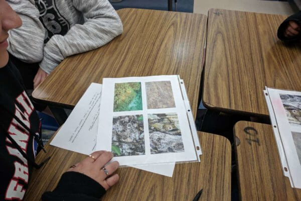 Students look at printed images of camouflaged animals.