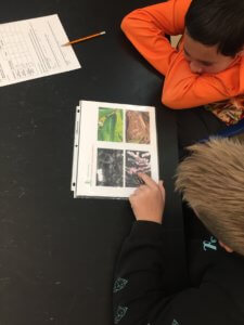 Students look at pictures of animals using camouflage.