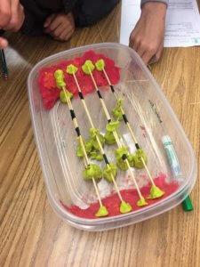 Students construct model bridges.