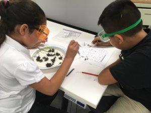 Students identify bones from an owl pellet.