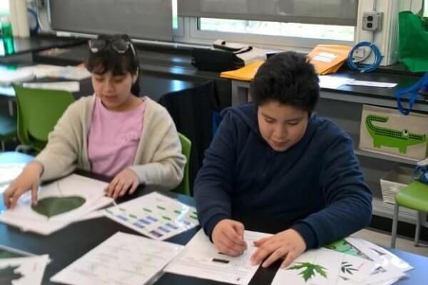 Students work at a table looking at leaves.