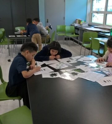 Students work at a table, looking at leaves.