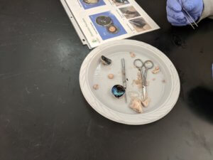 A plate with a sheep eye dissection and tools are shown.