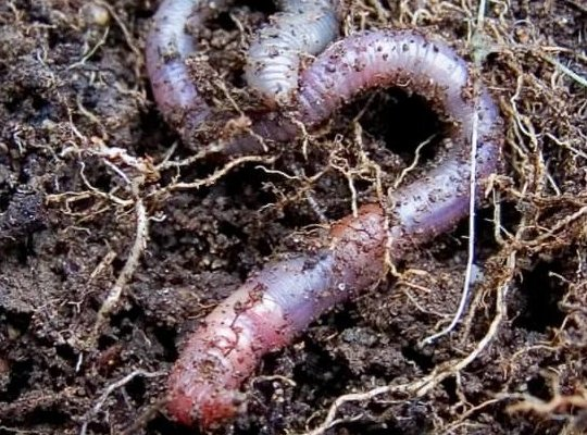 Decomposers&Soil